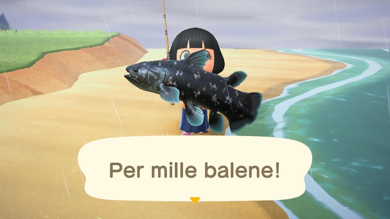Animal Crossings: New Horizons celacanto